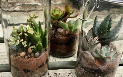Mini Gardens great for the Kids