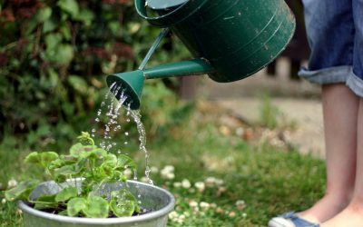 Warmer Weather Watering