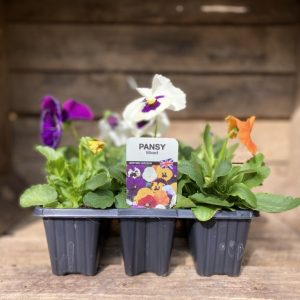 Pansies from Hudson's Garden Centre